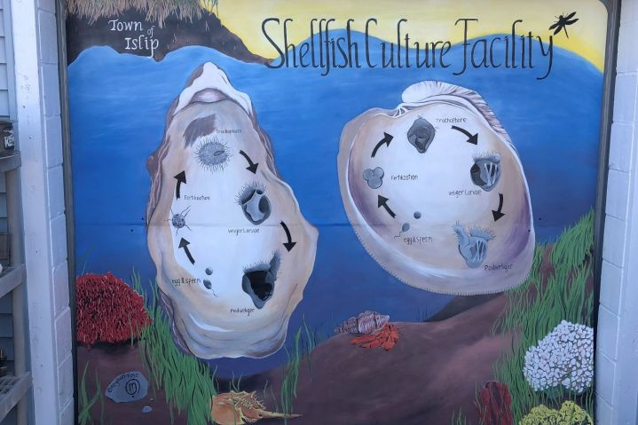 The New Mural at the Shellfish Hatchery in East Islip
