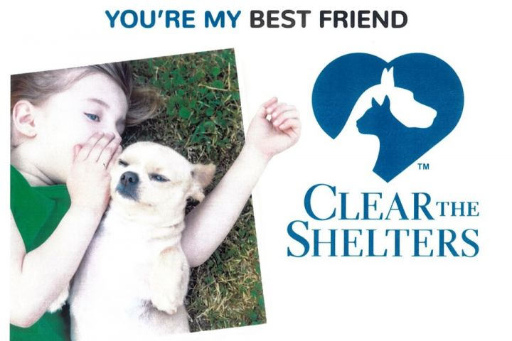 2019 Clear The Shelters Event at the Islip Animal Shelter